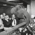ieud-news-uomini-alcool-elefanti