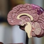 ieud-news-cancellare-memoria-droga-dipendenza